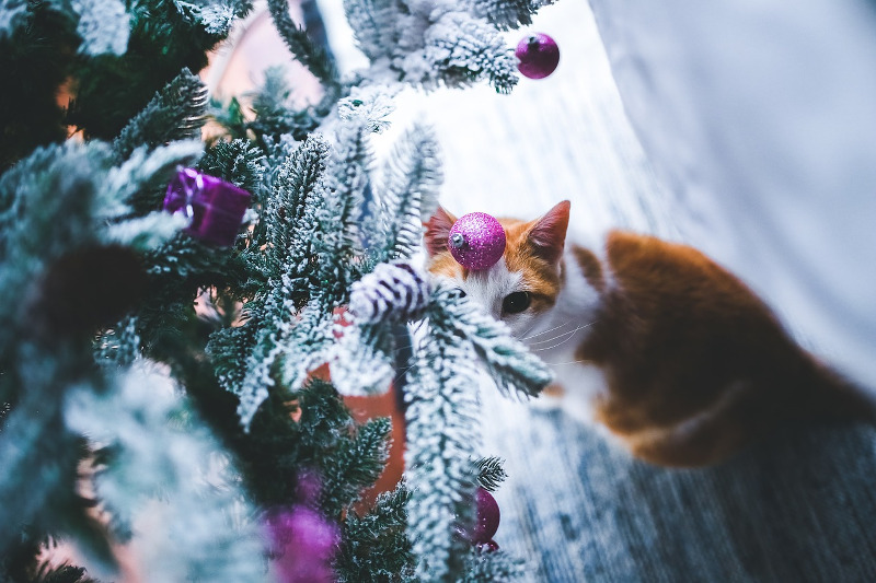 Cat creeping on a Christmas tree